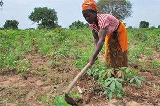 Africa farm