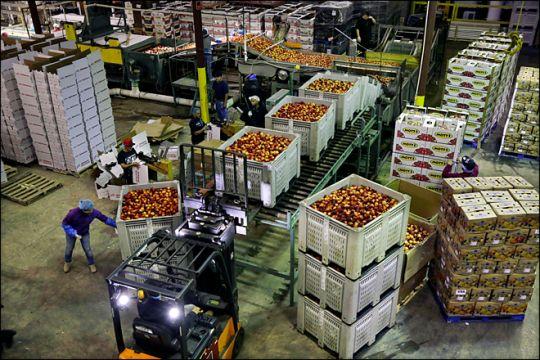 U.S. wholesale sector