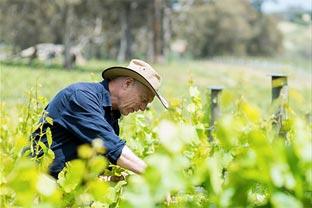 Australia wine