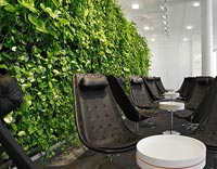 Green office wall