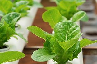 Indonesia horticulture