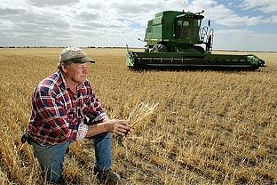 Global wheat
