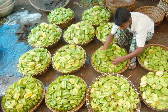 Bangladesh fruit