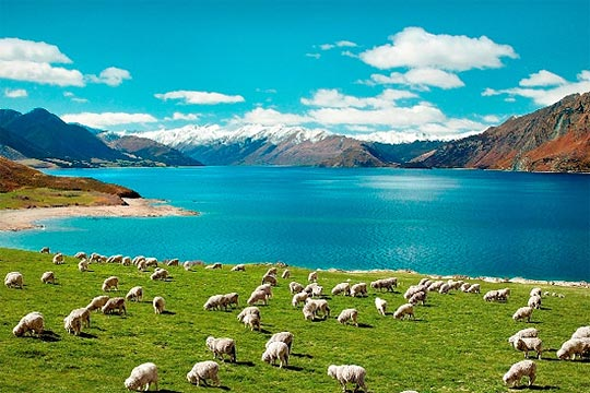 New Zealand farm