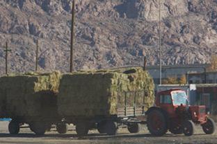 Tractor Mongolia