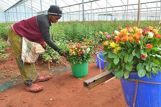 Kenya flower