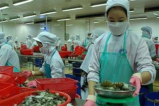 Vietnam shrimps