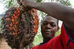 Nigeria oil palm