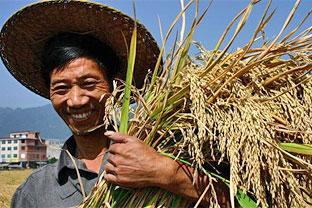 China super rice