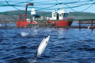 Selonda and Dias Aquaculture