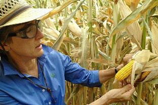 Crop biotechnology